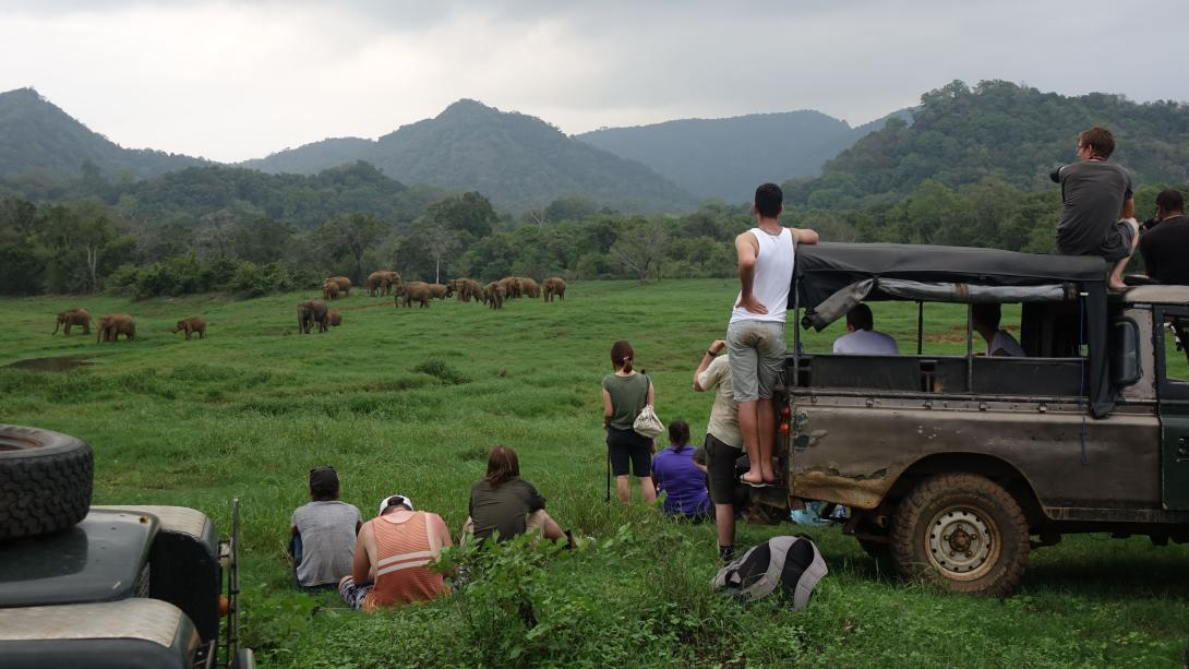 Conservation volunteers monitor elephant herds as part of their project in Sri Lanka.